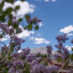 CreeksideChalets_purple-flowers-mountain-min