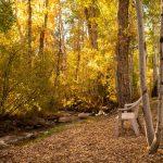 CreeksideChalets-columbia-fall-creek