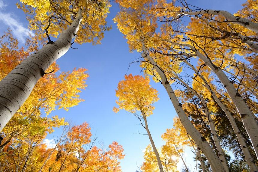 fall foliage salida co